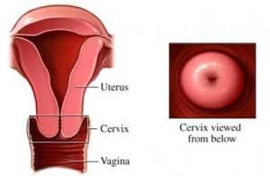 cervix.www.services.epnet.comjpg