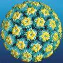 penampakan virus HPV